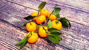 与绿色的明亮,水多,新鲜的蜜桔离开-从在木桌背景的家庭柑桔结果实 免版税库存照片