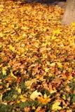与黄色的树在秋天公园离开 图库摄影