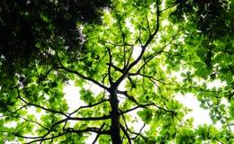 与绿色的树背景 免版税库存照片