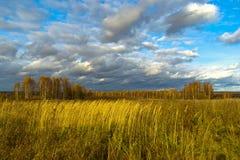 与黄色的桦树在一个黄色领域离开 免版税库存照片