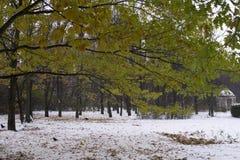 与绿色的橡木分支在第一雪的背景离开在秋天公园 图库摄影