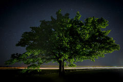 与绿色的橡树在夜空的背景离开 免版税图库摄影
