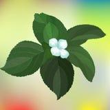 与绿色的白花在五颜六色的背景离开 库存照片