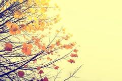 与黄色的秋天树离开反对天空 免版税库存照片