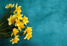 与黄色的美丽的卡片开花在绿松石textur的黄水仙 免版税库存照片