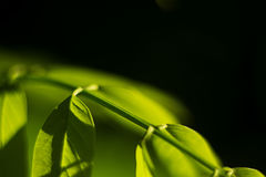 与绿色的自然背景离开分支 库存照片