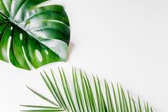 与绿色的花卉概念在白色背景顶视图大模型离开 免版税库存图片