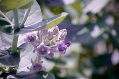 与紫色的花 库存图片