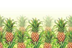 与绿色的菠萝在农场把生长的热带水果留在 菠萝图画标志无缝的样式框架边界 颜色illu 免版税库存照片