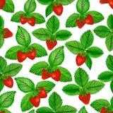 与绿色的水彩草莓在白色背景离开 无缝的模式 图库摄影
