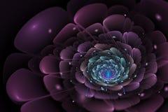 与紫色的黑背景和绿松石在中心开花 库存照片