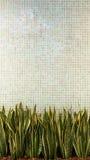 与绿色的绿色墙壁瓦片瓷镶嵌构造背景离开植物 美好的舒适葡萄酒样式内部家庭装饰 免版税库存照片