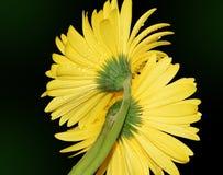 与黄色的黄色 免版税图库摄影