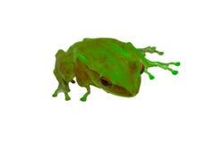 与绿色皮肤和红色的青蛙在白色背景注视 免版税库存照片