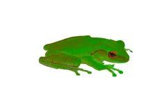 与绿色皮肤和红色的青蛙在白色背景注视 库存图片
