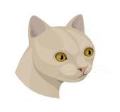 与黄色眼睛和桃红色鼻子的猫 免版税库存图片