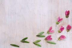 与绿色种子的红槭种子在木背景 一个精美花卉框架 安置文本 库存图片