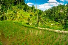 与绿色米大阳台的美好的风景在Tegallalang村庄, Ubud,巴厘岛,印度尼西亚附近 库存图片