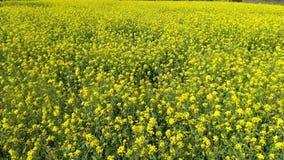 与绿色红色叶子的黄色花 库存图片