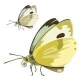 与黄色翼的蝴蝶 传染媒介昆虫 免版税库存照片