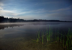 与绿色芦苇的夜风景在一个有薄雾的湖 免版税库存照片