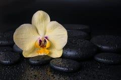 与黄色花兰花,兰花植物的美丽的温泉静物画 免版税库存照片