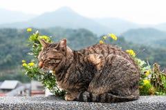 与黄色花的一只逗人喜爱的猫 库存图片