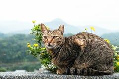 与黄色花的一只逗人喜爱的猫 库存照片