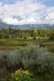 与黄色花的大提顿峰风景 图库摄影