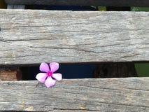 与紫色花的木头 免版税库存图片