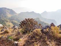 与紫色花的树灌木在与石灰石和草甸的山小山 免版税库存照片