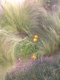 与黄色花的海草 免版税库存图片
