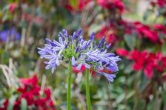 与紫色花的美好的春天背景 库存照片