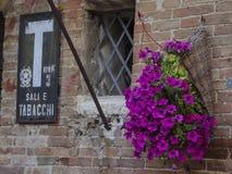 与紫色花的老tabac转售者标志在皮恩扎,意大利 图库摄影