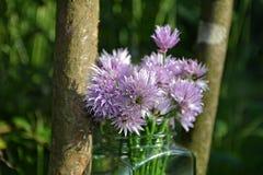 与紫色花的花束香葱在木头的清楚的玻璃有自然本底 免版税图库摄影