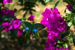 与紫色花的绿色蝴蝶 免版税库存图片