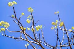 与黄色花的Braches 库存照片