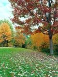 与绿色草坪和五颜六色的树的秋天风景 免版税图库摄影