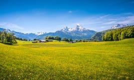 与绿色草甸、农舍和积雪覆盖的山上面的田园诗高山风景 免版税图库摄影