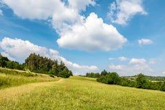与绿色草甸、森林和蓝天的夏天风景 免版税库存图片