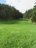 与绿色草甸前景和森林的高山风景有天空的在背景中 也有在右边的一个小的木房子 免版税库存图片