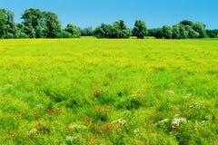 与绿色草甸和开花的农村夏天风景在阳光下开花 库存图片