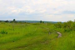 与绿色草甸和树的风景 免版税库存照片