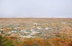 与黄色草的一个宽干草原在Ukok高原 免版税图库摄影