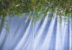 与绿色蕨的美丽的花离开墙壁背景 免版税图库摄影