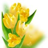 与黄色郁金香的拼贴画 免版税库存图片