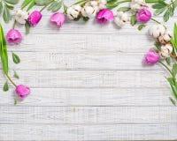 与紫色郁金香的花卉框架 免版税库存照片