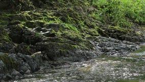 与绿色青苔的岩石岸 股票视频