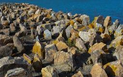 与黄色青苔的岩石由海洋在纽波特,罗德岛州 免版税库存图片