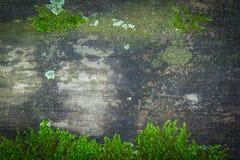 与绿色青苔的木纹理 免版税库存图片